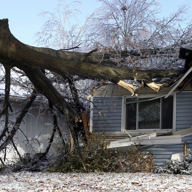 give-and-take-tree-service-emergency-tree-service-feature