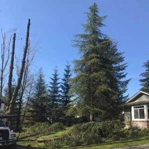 give-and-take-tree-service-pruning-trimming-feature
