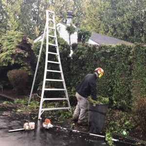 give-and-take-tree-service-pruning-trimming1