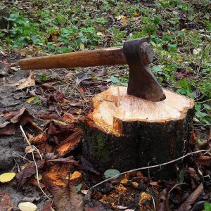 give-and-take-tree-service-stump-removal-feature