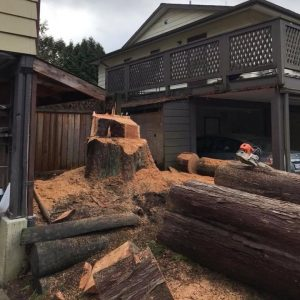 give-and-take-tree-service-stump-removal1