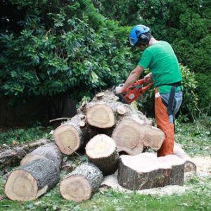 give-and-take-tree-service-stump-removal2