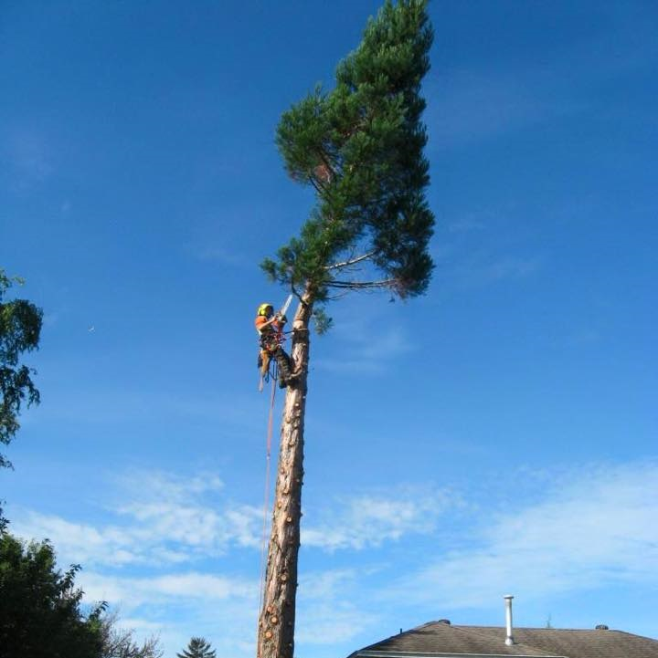 give-and-take-tree-service-tree-removal-feature